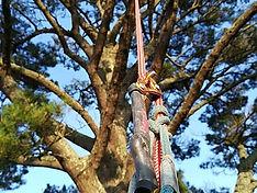 Aerial tree safety assesment climbing devon