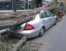 Emergency treework require tree surgeon