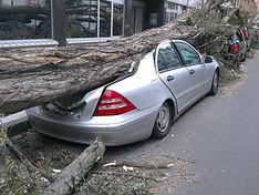 Emergency treework tree failed