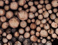 Timber wood pile logs split