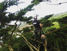 tree climbing survey devon exeter