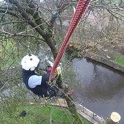 tree surgeon removing tree