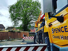 Crane tree removal houses
