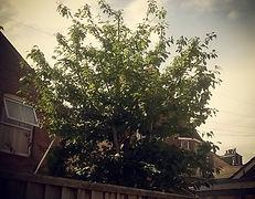 Tree pruning exeter devon reduction