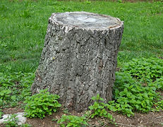 Tree Stump needs grinding / removing