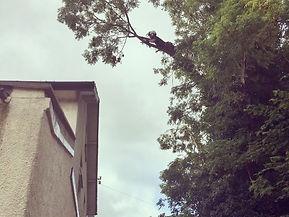 Tree surgeon devon exeter trees