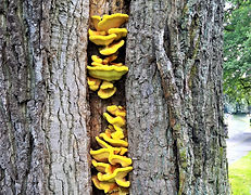 Tree survey fungus consultancy