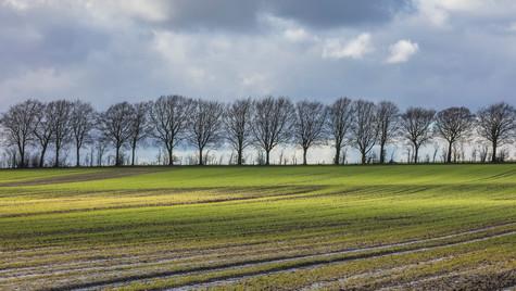 Calne landscape