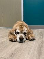 Animal Veterinary care in Chicago