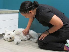k9 Rehabiliation and veterinary medicine