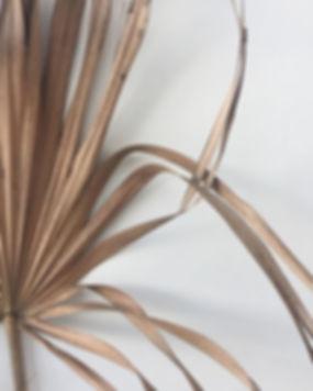 Plant Leaves Turning Yellow _ Brown Plan