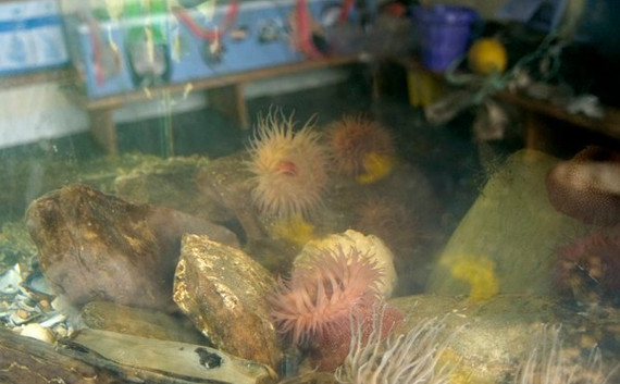 rock pool fish tank 2012