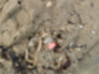 P8159680 sin use plas.jpg