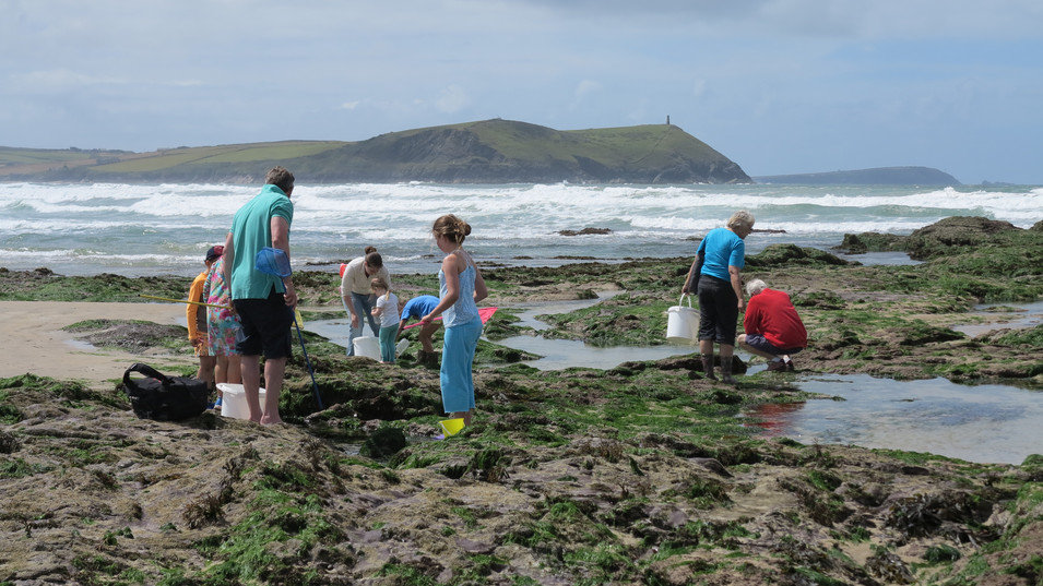 Rockpooling fun for all the family.jpg
