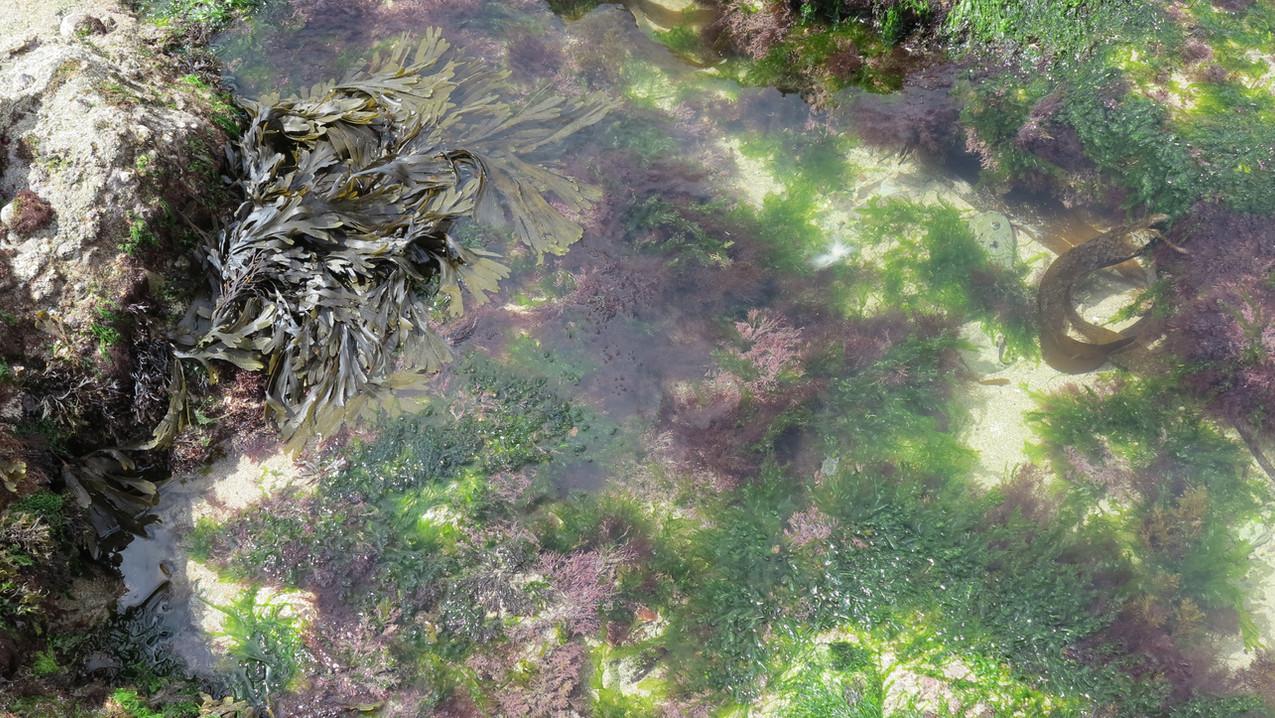 NewPolzeath Rock pools.jpg
