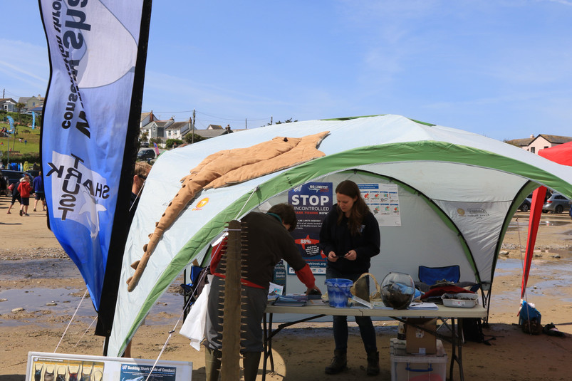 Shark Trust display - photo by Jane Pickles 2015