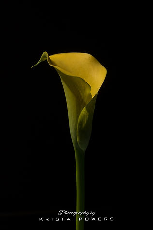 Signed Yellow Lily 2.jpg