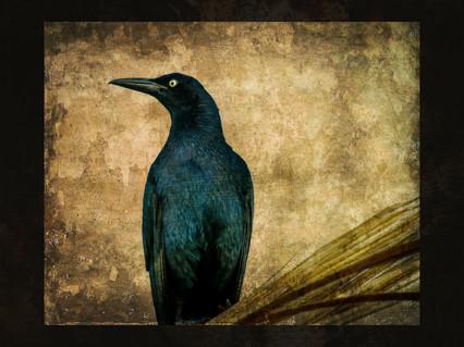 """Black Bird Presence"""