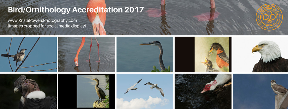 Bird-Ornitholody Accreditation 2017.jpg