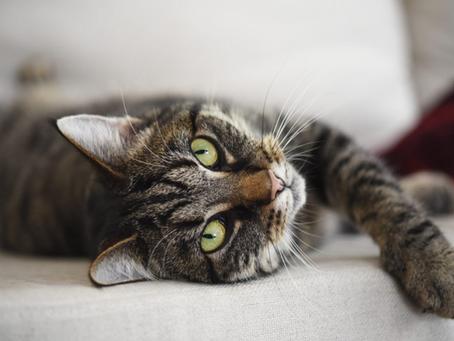 Is Your Feline Sending Divine Signs?