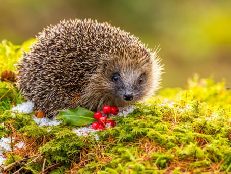 6 Gardening Blunders Animal Lovers Should Avoid