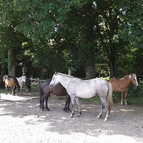 Brockenhurst Bed and Breakfast New Forest Ponies