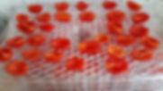 Pomodorini sull'Essiccatore