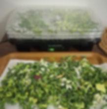 Sarti di verdura riciclati per dado vegetale
