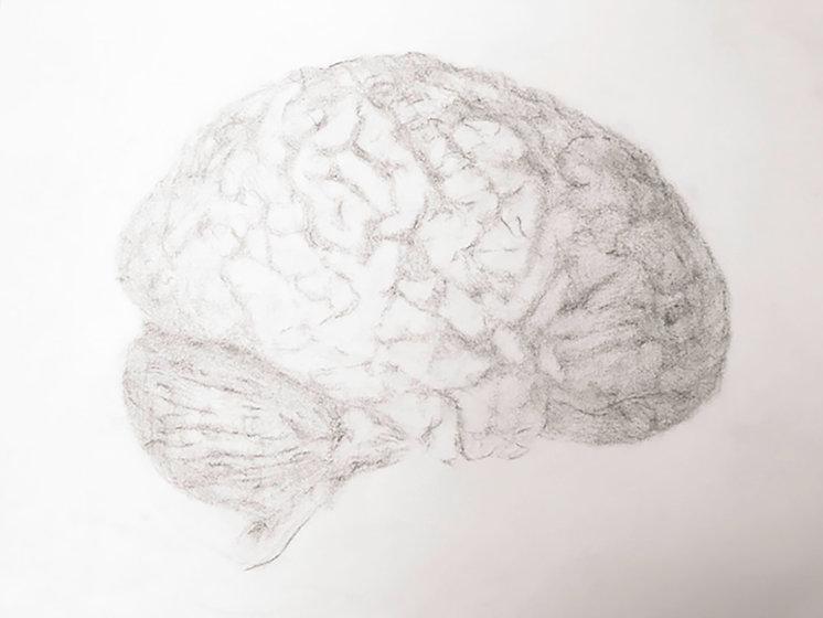 brain 415.jpg