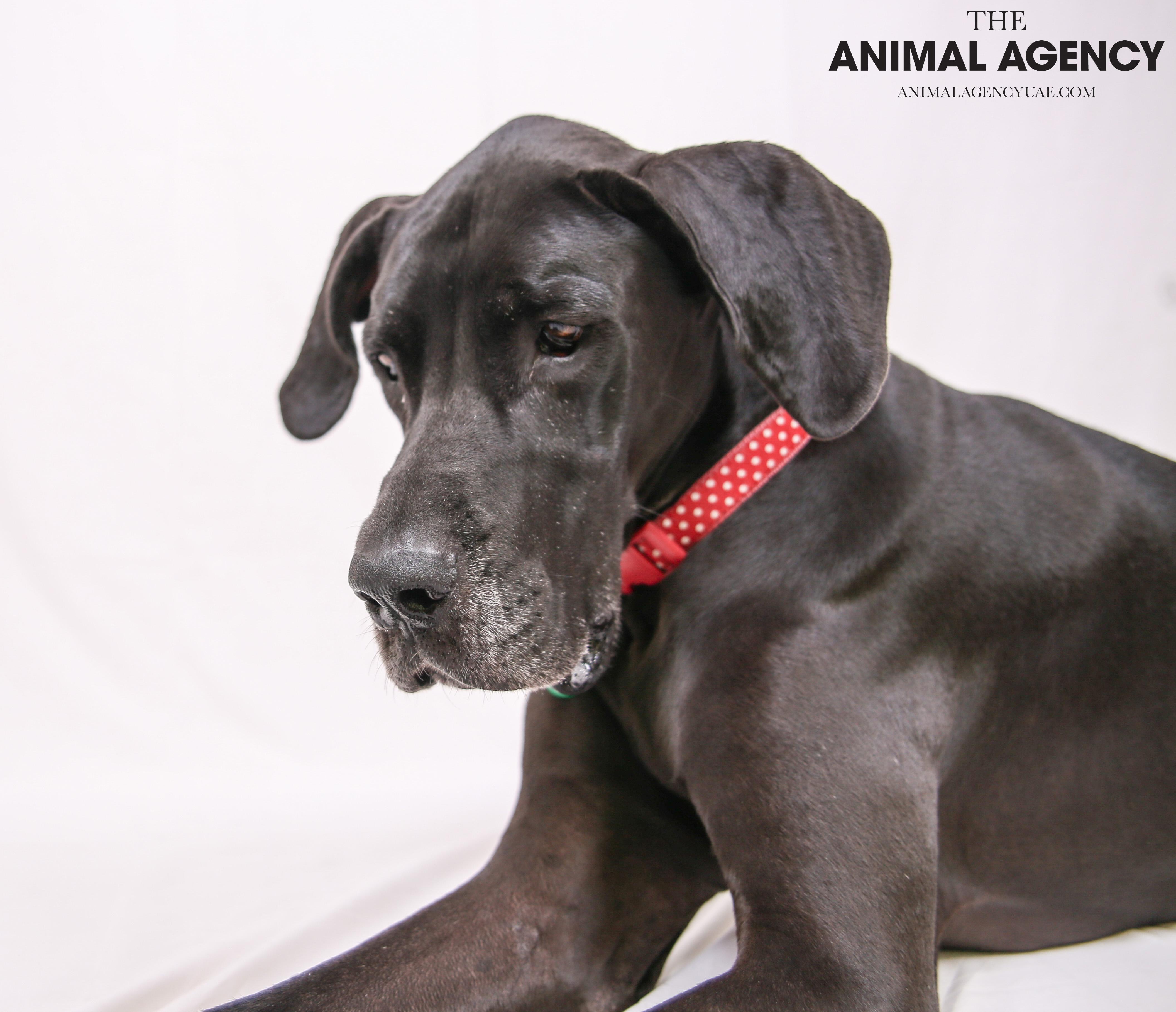 The Animal Agency UAE_Dog_Minnie (6).jpg