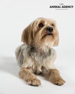 Animal Agency_Wellington_LR-5753