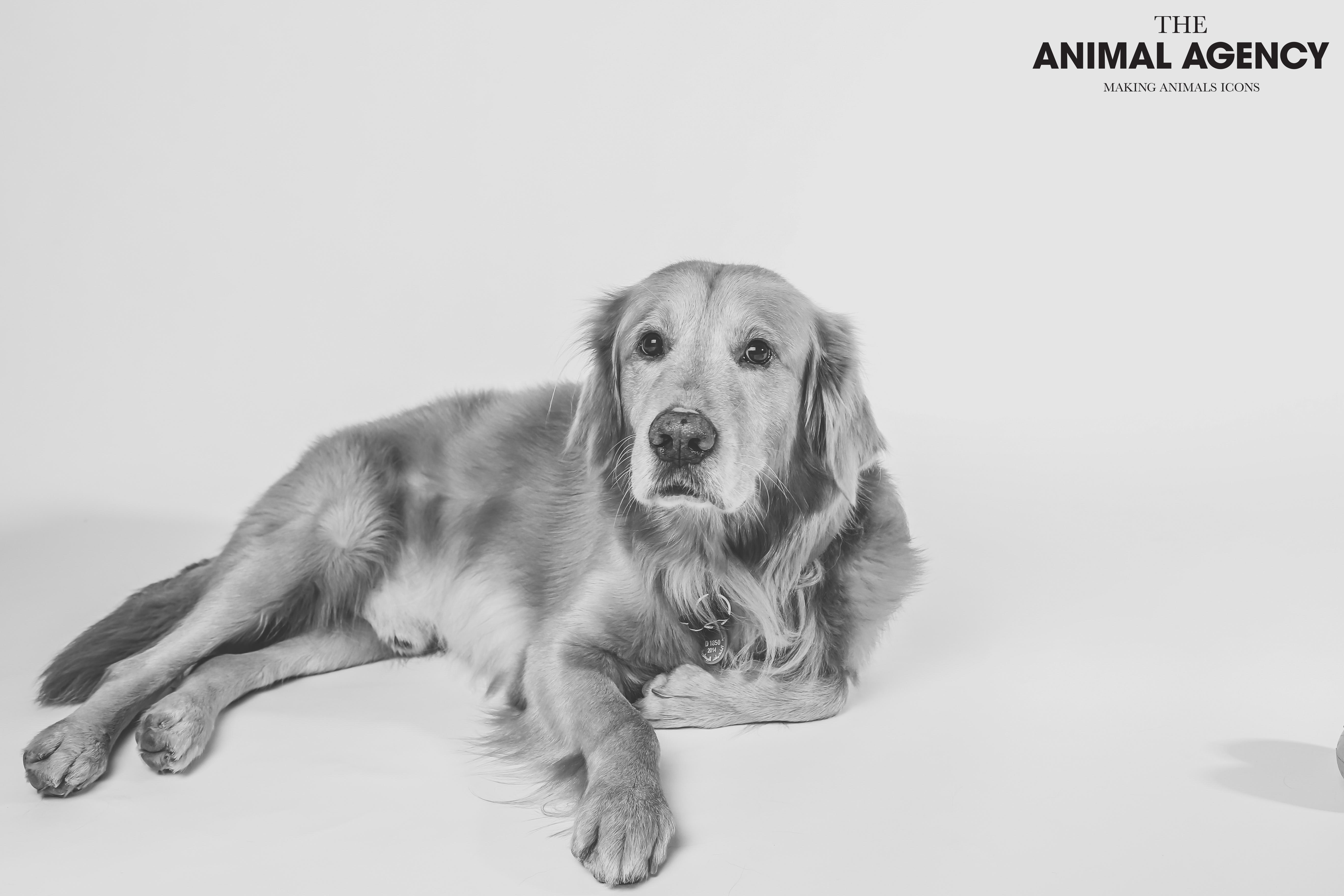 Animal Agency_Bubbly-4.jpg
