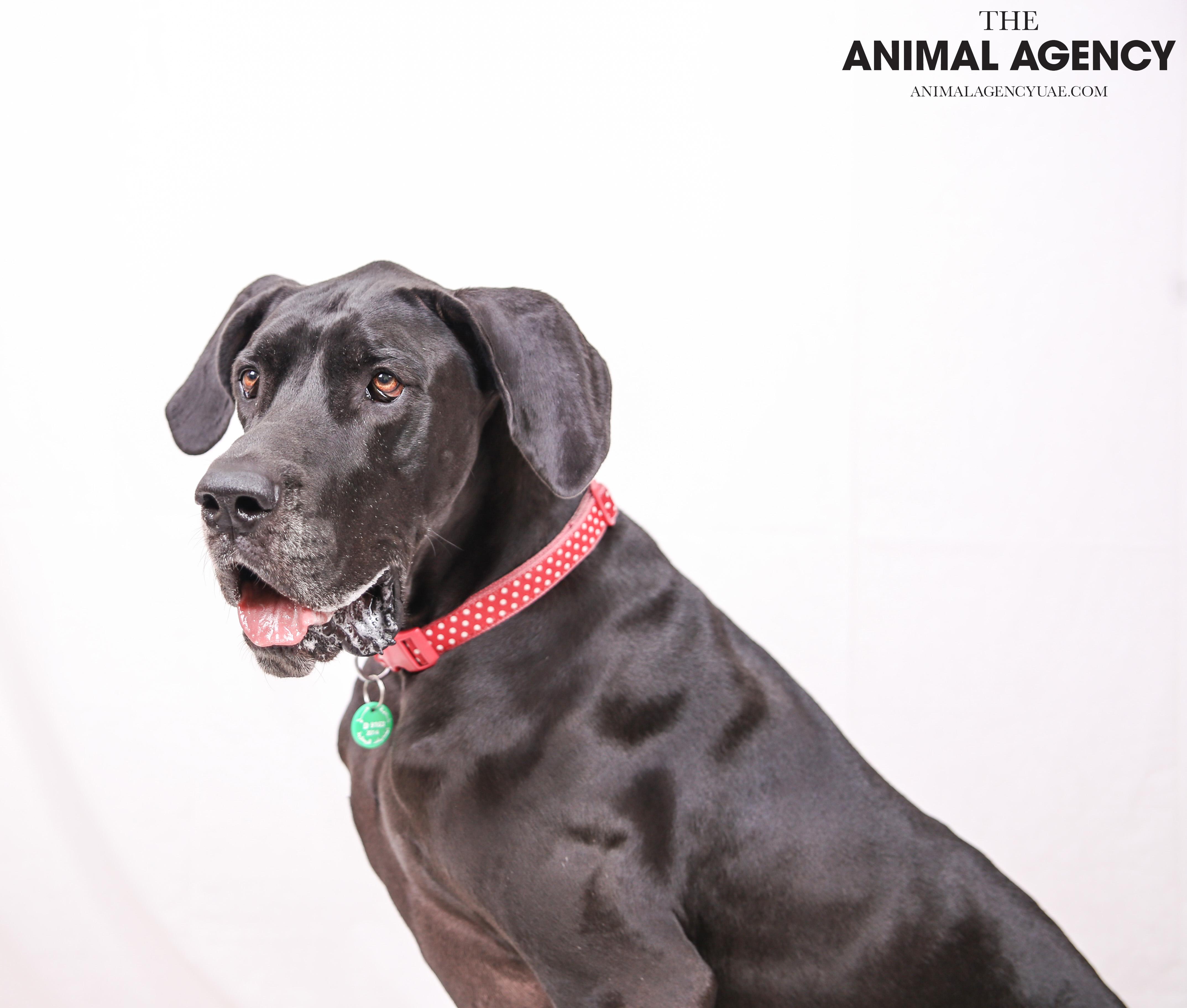 The Animal Agency UAE_Dog_Minnie (2).jpg