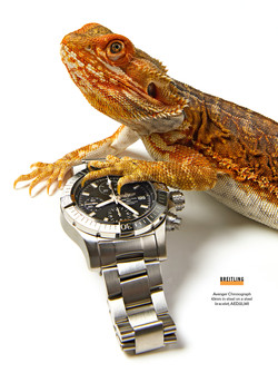 ESQUIRE SHOOT lizards 1 (1)