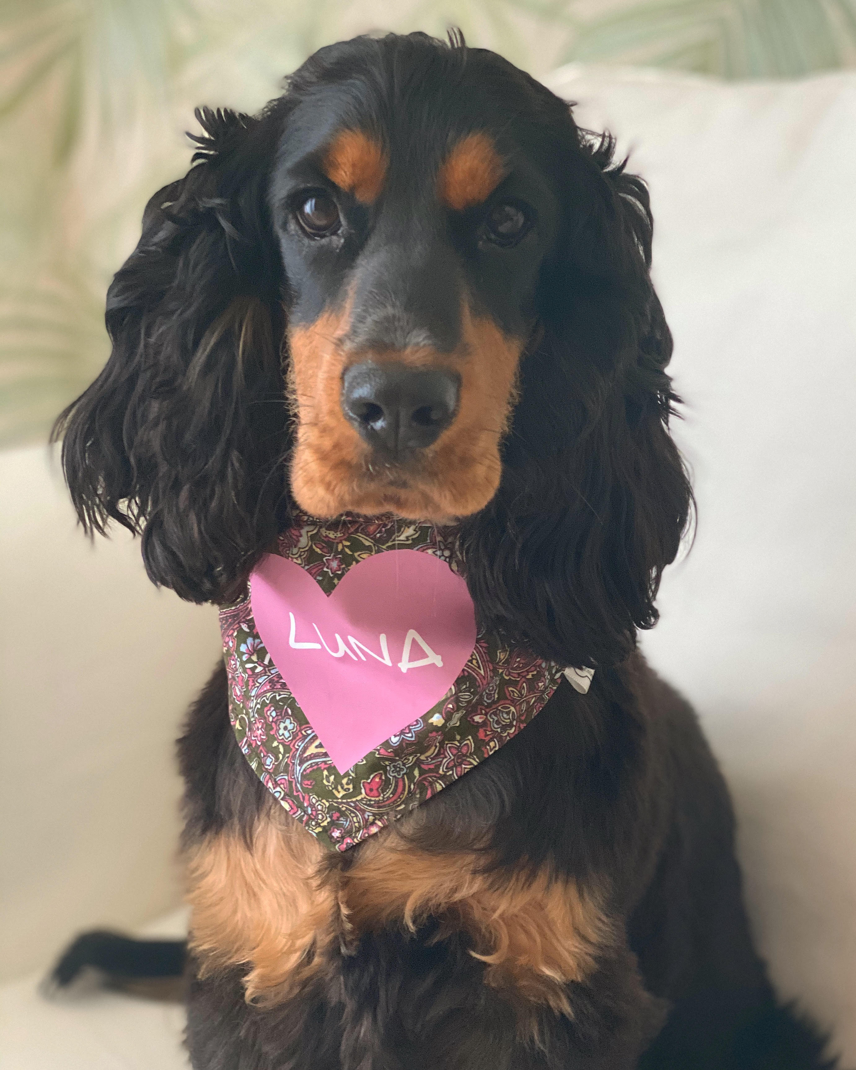 Luna Cocker Spaniel