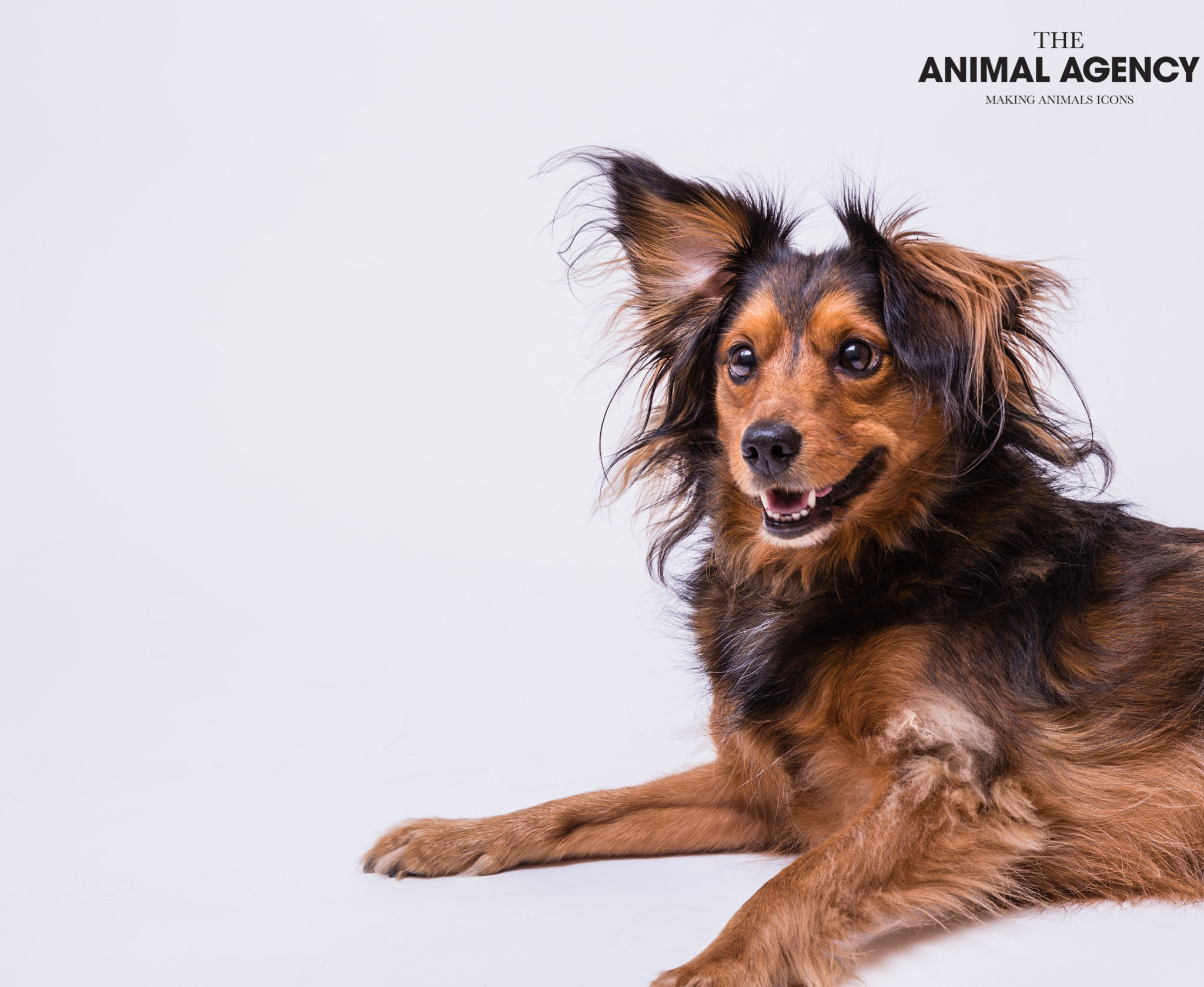 Rupert_Animal Agency_Online-23