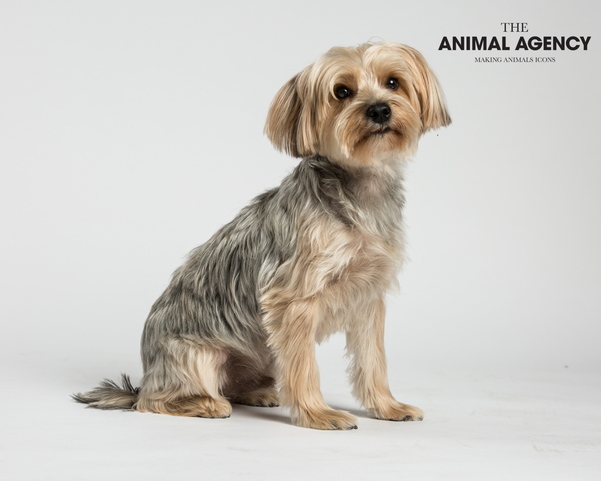 Animal Agency_Wellington_LR-5823