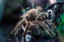 tarantula4