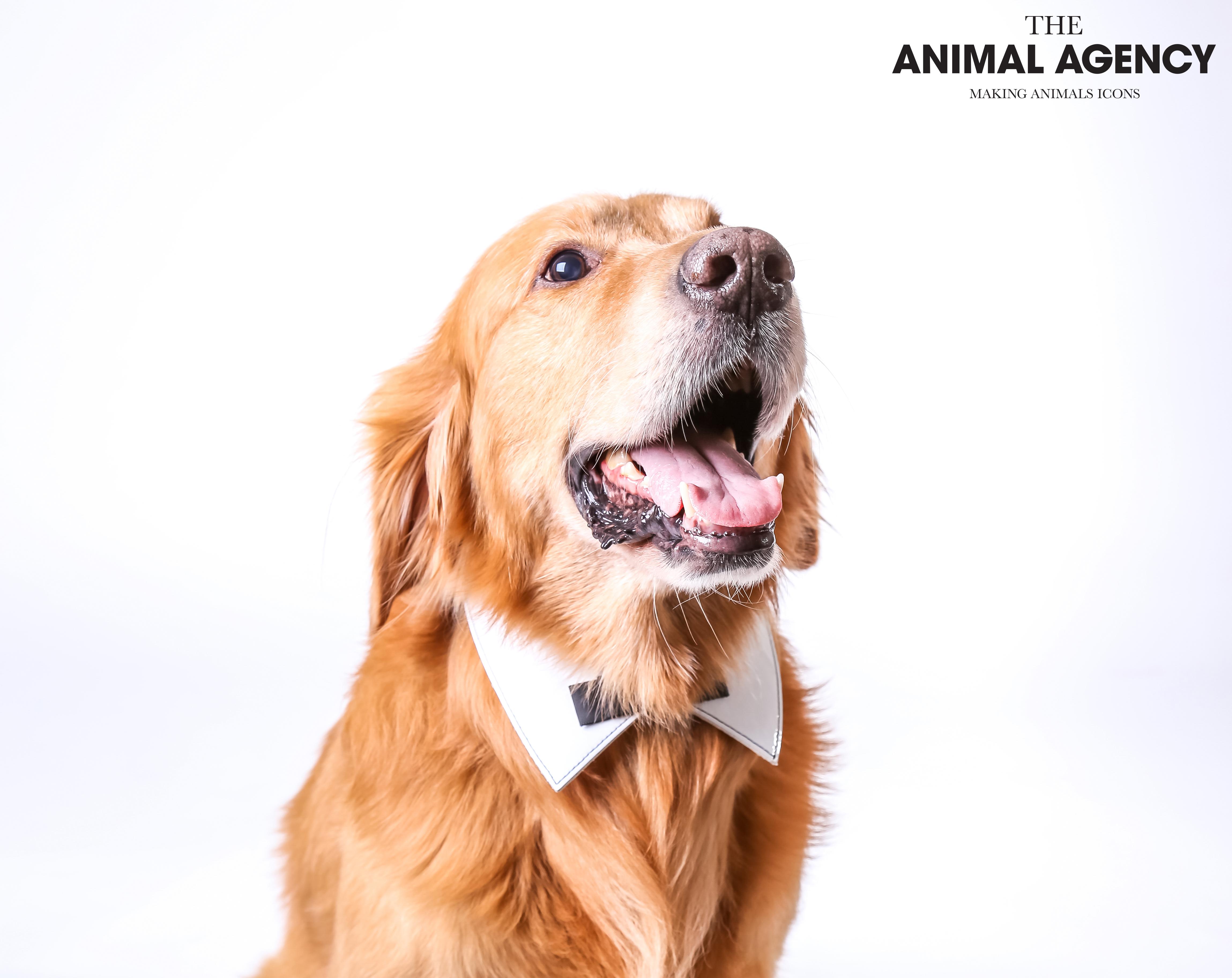 Animal Agency_Bubbly-25.jpg