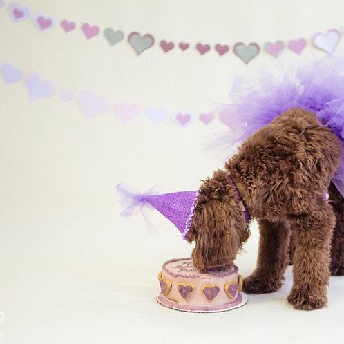 Pet Birthday Cake Photo Shoot