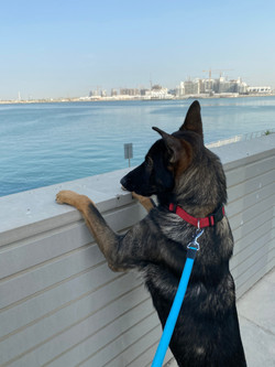 Max gsd 4