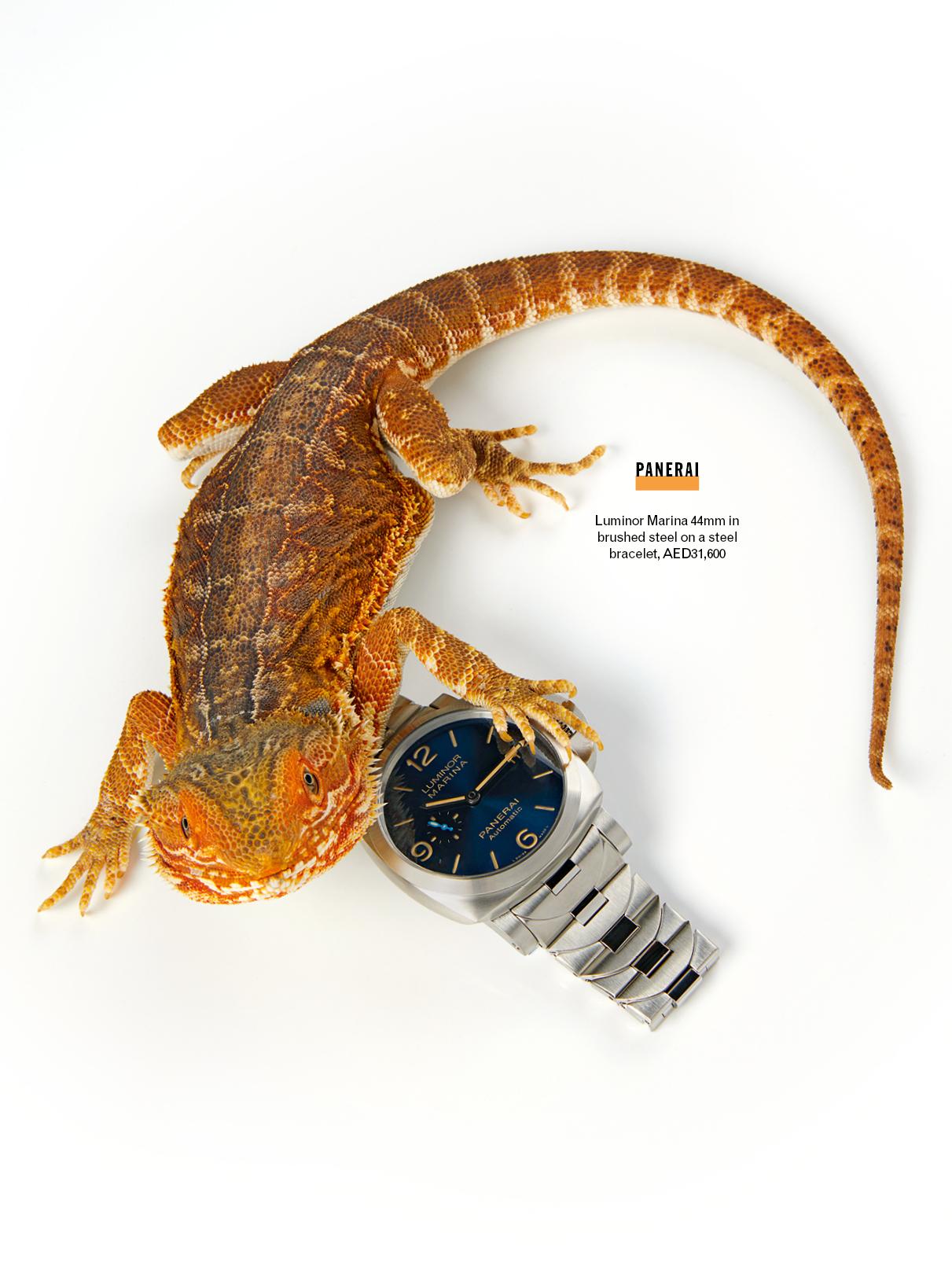 Esquire SHOOT lizards 7