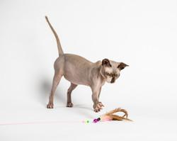 Animal Agency_Skinner_LR-5542