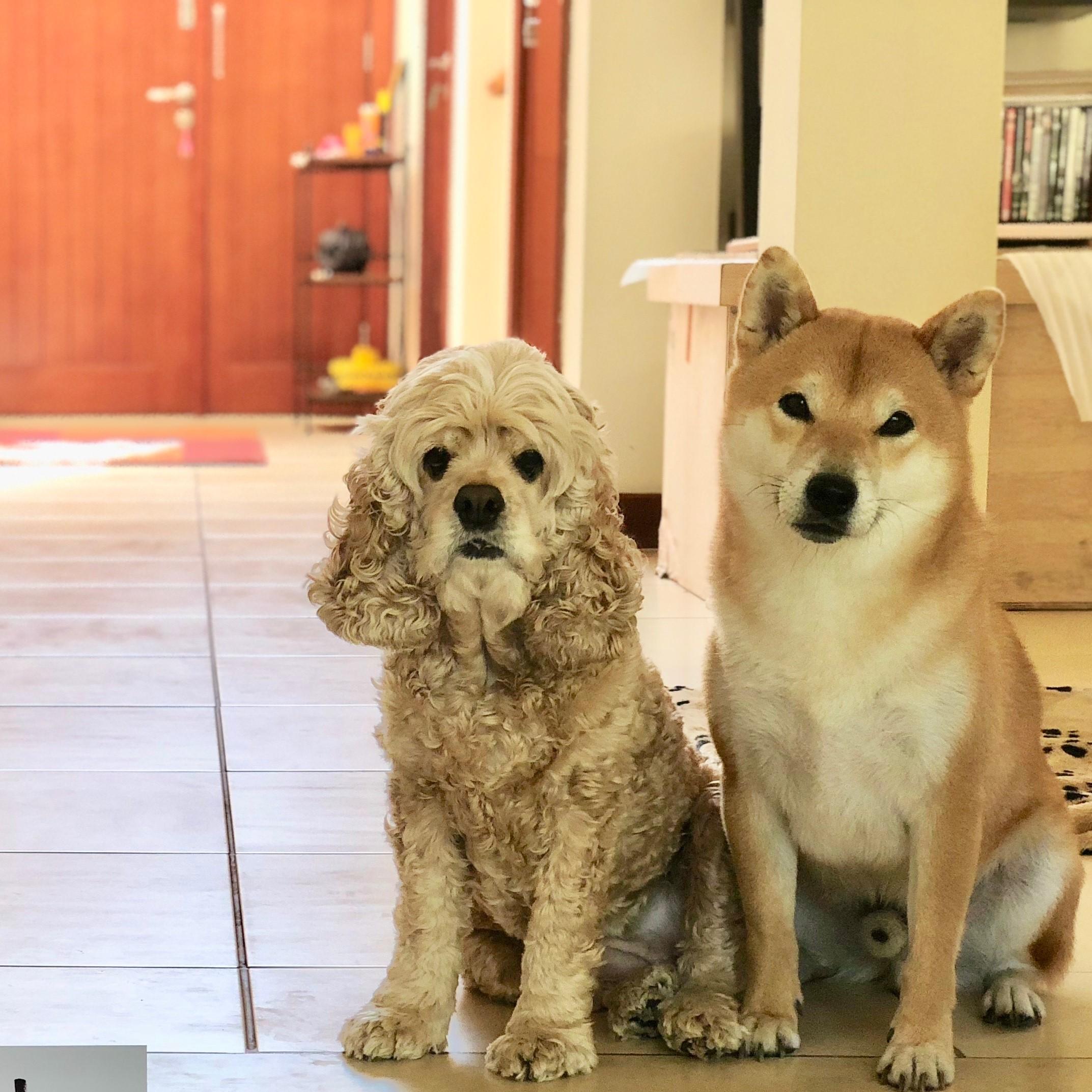 Miel & Oscar