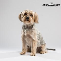 Animal Agency_Wellington_LR-5692