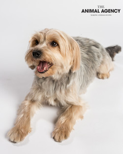 Animal Agency_Wellington_LR-5643