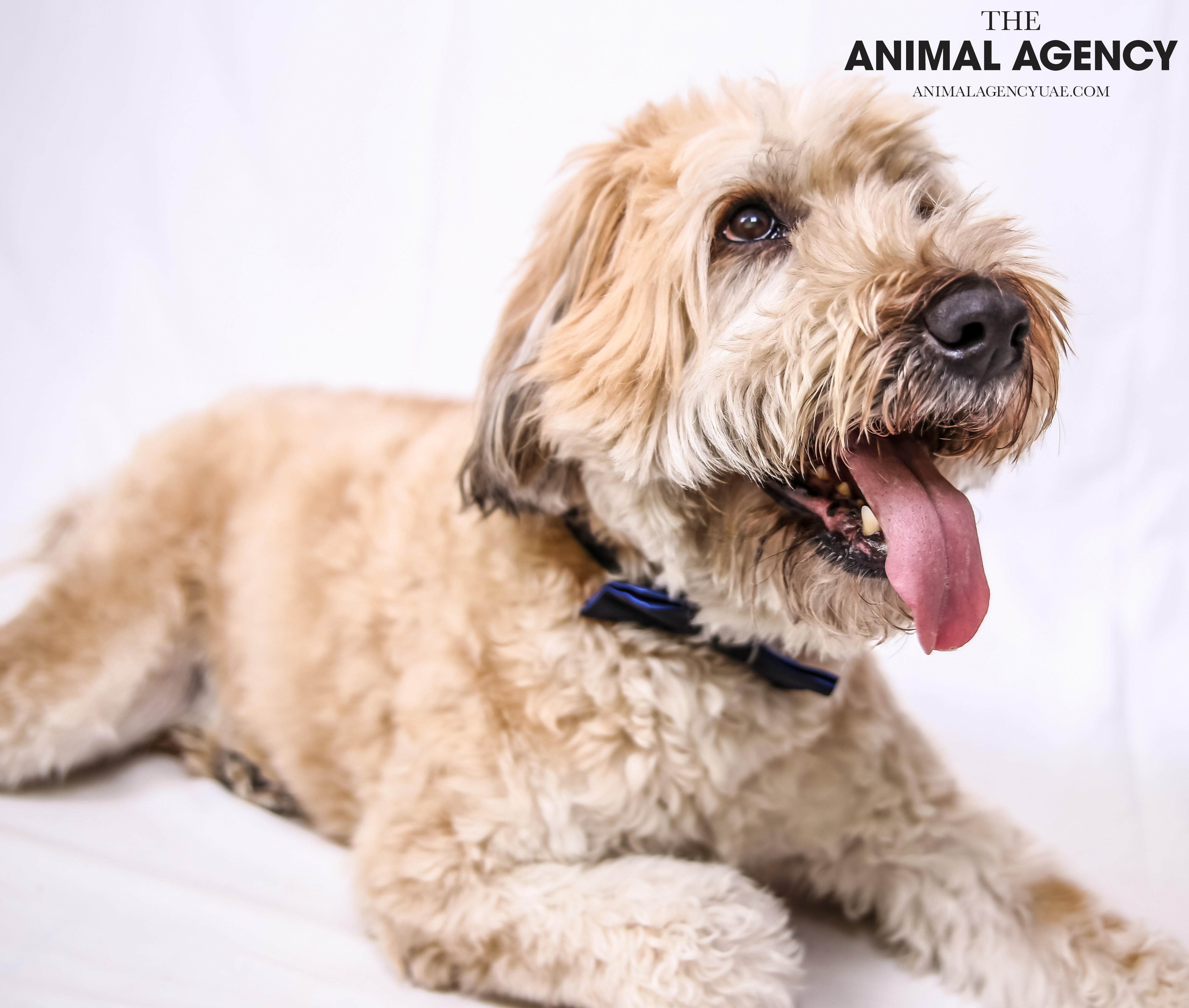 The Animal Agency UAE_Dog_Remy (7).jpg