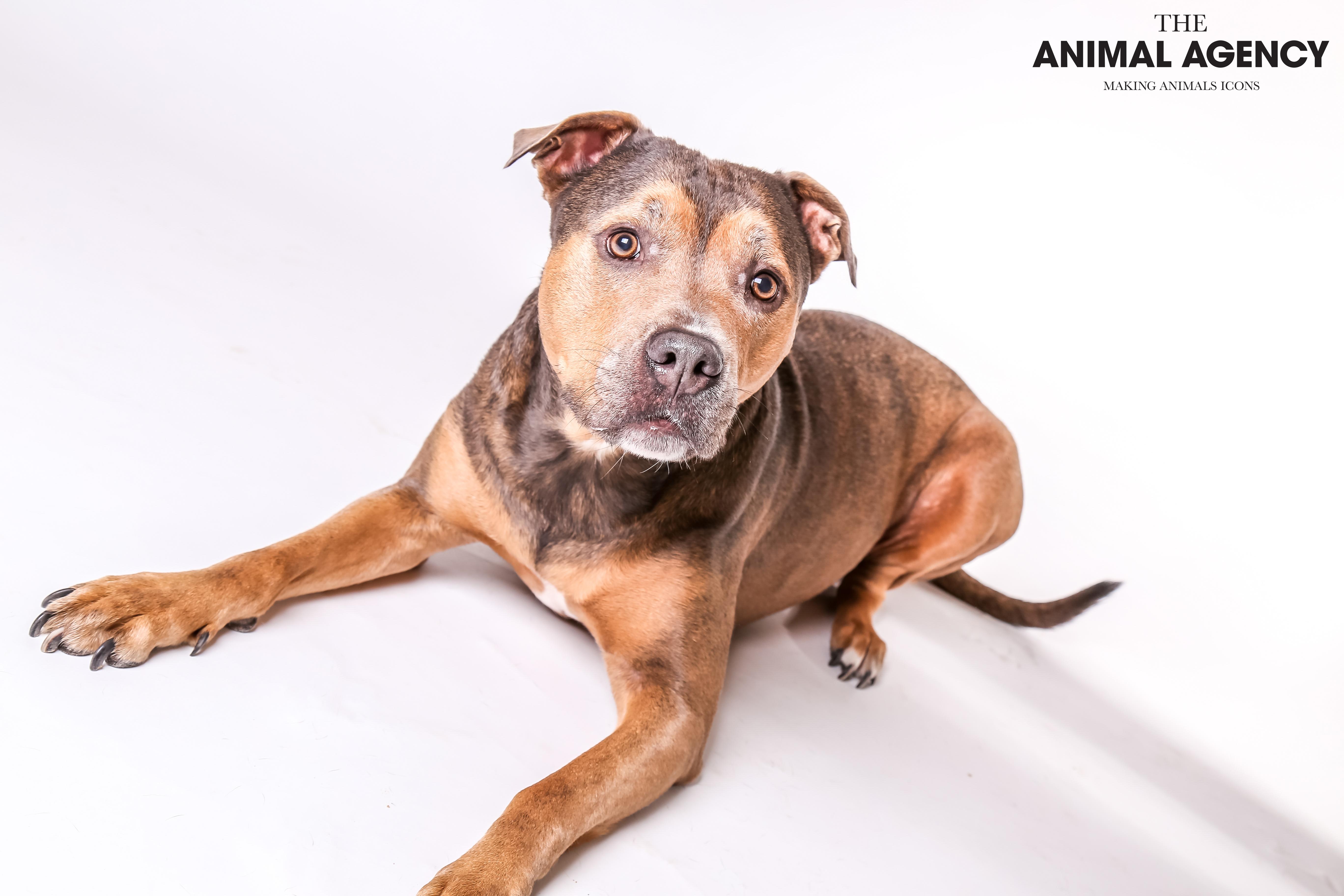 Animal Agency_Lady-36.jpg