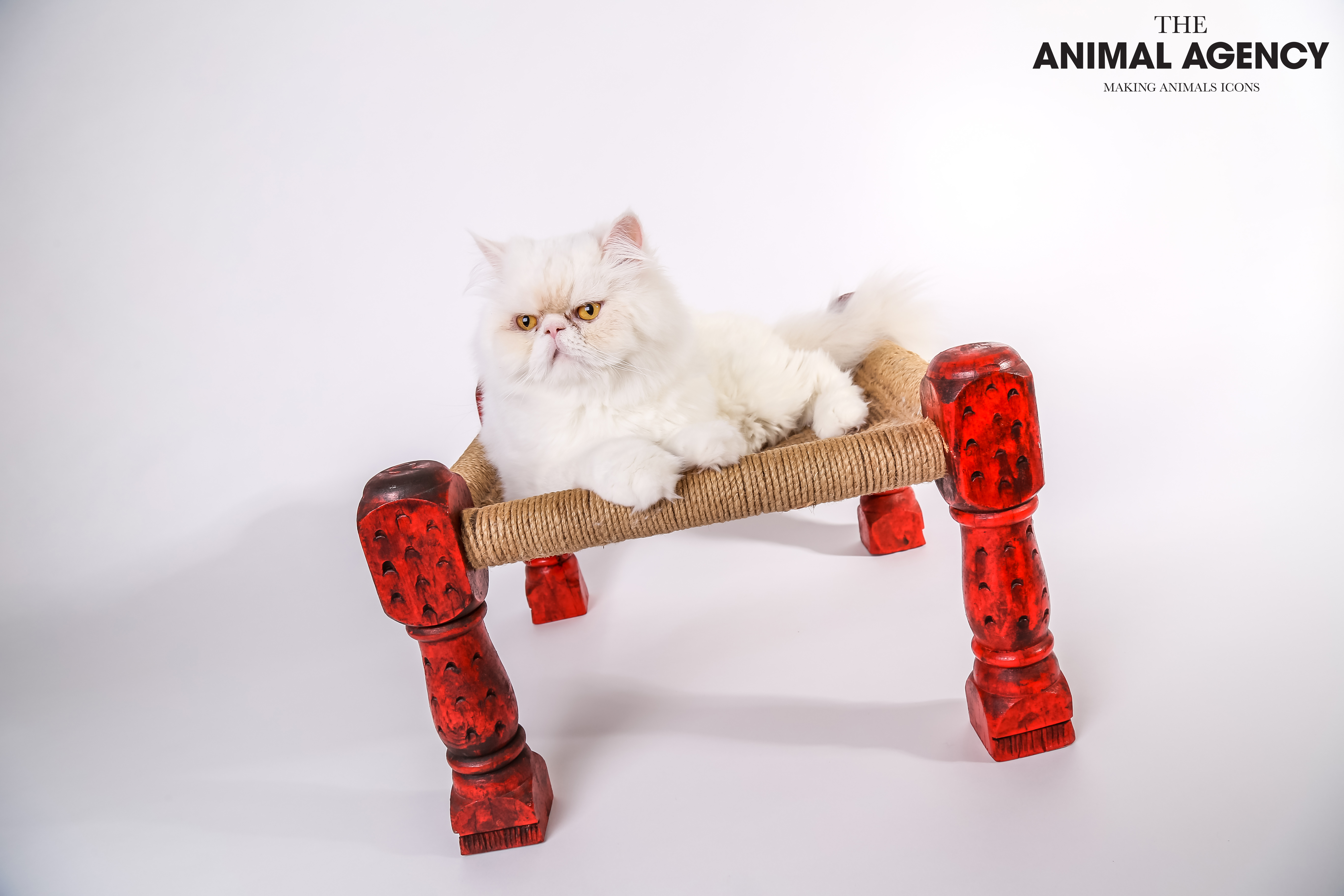 Animal Agency_Max-87.jpg