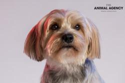 Animal Agency_Wellington_LR-5668